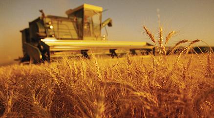 Стремительное падение: как протеже Милованова довел «Аграрный фонд» до миллиардных убытков • SKELET-info