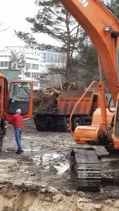 Вырубка зеленой зоны на ул. Жмаченко, 28: связь с избиением Чорновол и экс-директором «Киевзеленстроя»