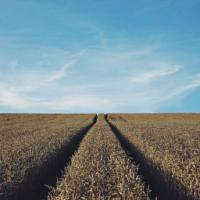 Опять двадцать пять: в Раде надумали переделать рынок земли