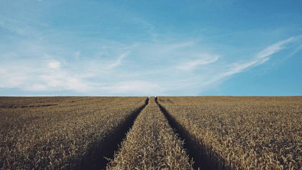 Цены, условия, риски. 10 главных вопросов по рынку земли, который открывается с 1 июля
