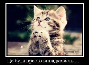 cat-300x220