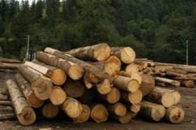 За вырубку лесов нужно в первую очередь наказывать чиновников, но государство на все наплевало • SKELET-info