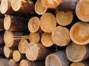 З України заборонять вивозити ліс-кругляк