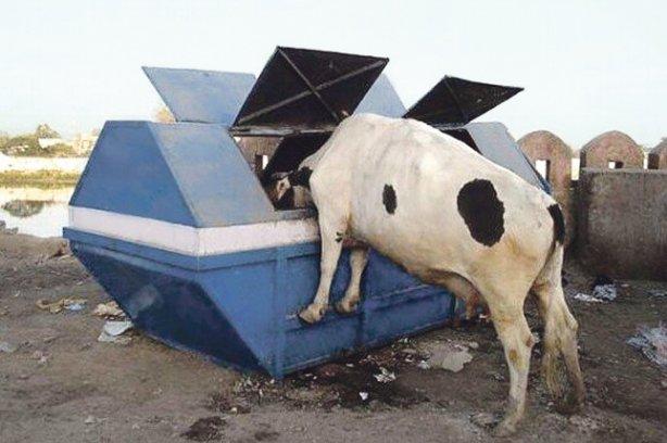 корова с мусоркой