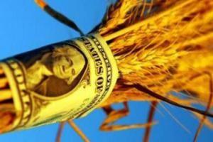 пшеница бабло