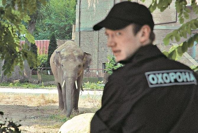 Слона в Киевский зоопарк привезли по спецзаказу