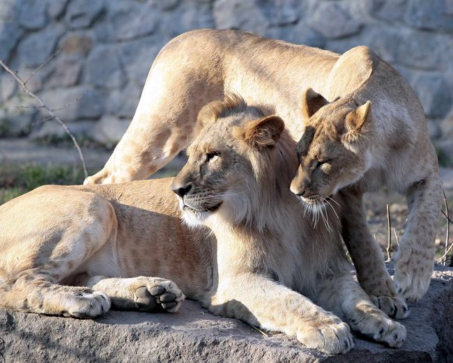 Фото Руслана Канюки 15.11.10 Киевский зоопарк