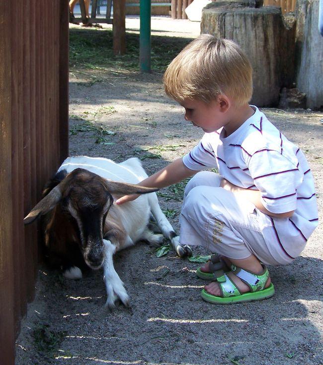 Фото Вероники Борковской 18.07.11 Зоопарк